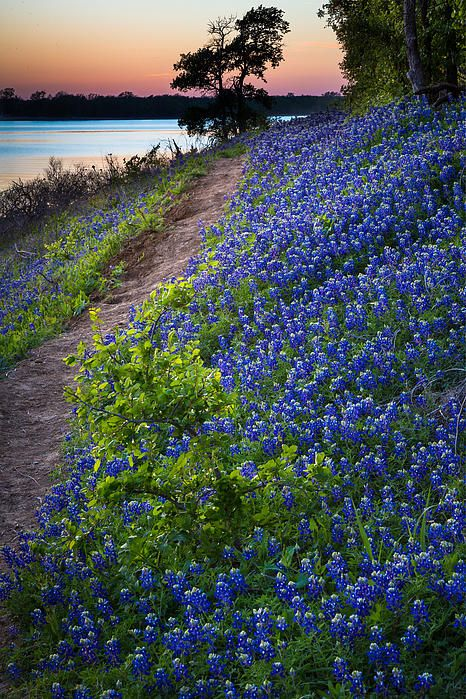 Flower Mound by Inge Johnsson Texas