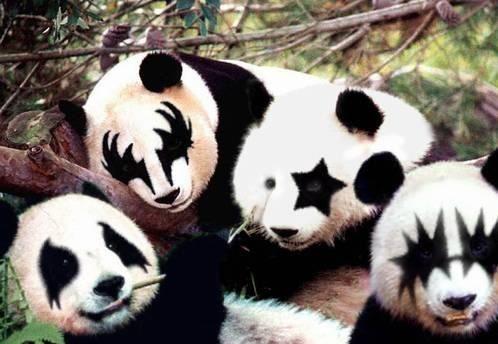 Rock on Pandas