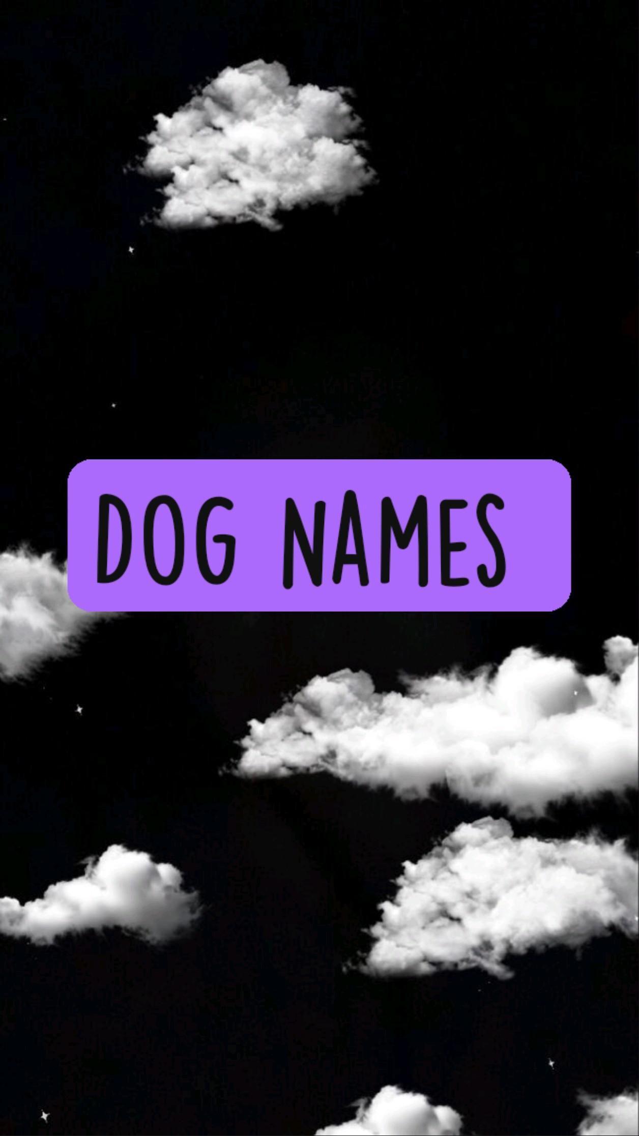 Dog Names 🐩
