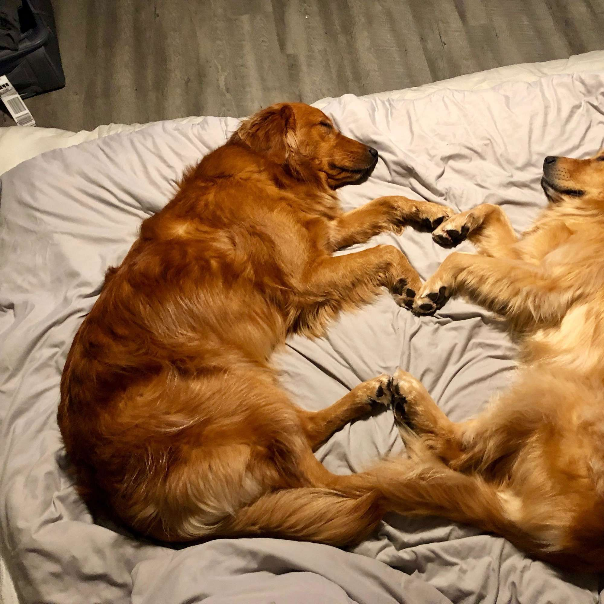 Dogs Have Sleepover And Fall Asleep Together In The Cutest Way
