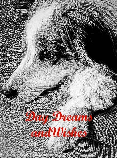 What are your day dreams and wishes?
