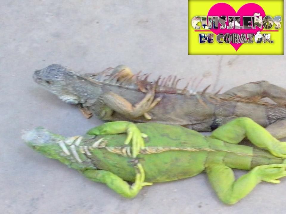 GASTRONOMIA DE MEXICO..DECLARADA PATRIMONIO DE LA HUMANIDAD, POR LA ...