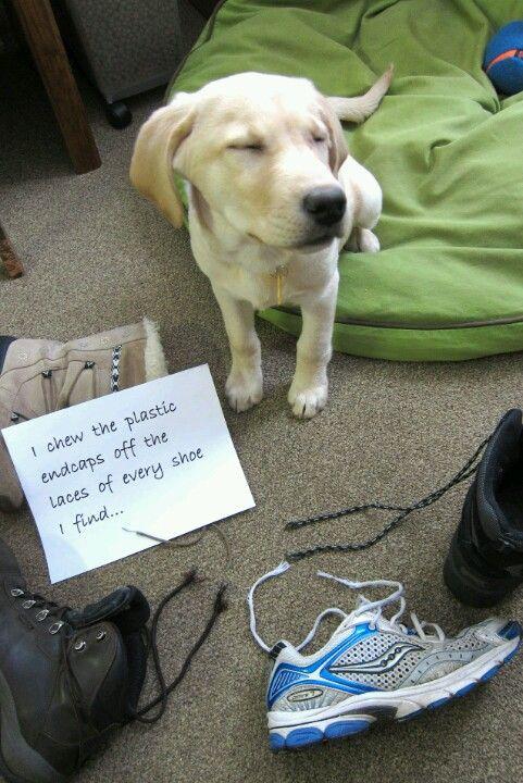 Endcap Addict Dog Shaming Photos Dog Shaming Funny Dog Memes