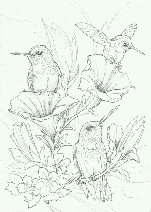 Humming Bird Flower Coloring Pages Colouring Jody Bergsma Artist Save For  Pyrography