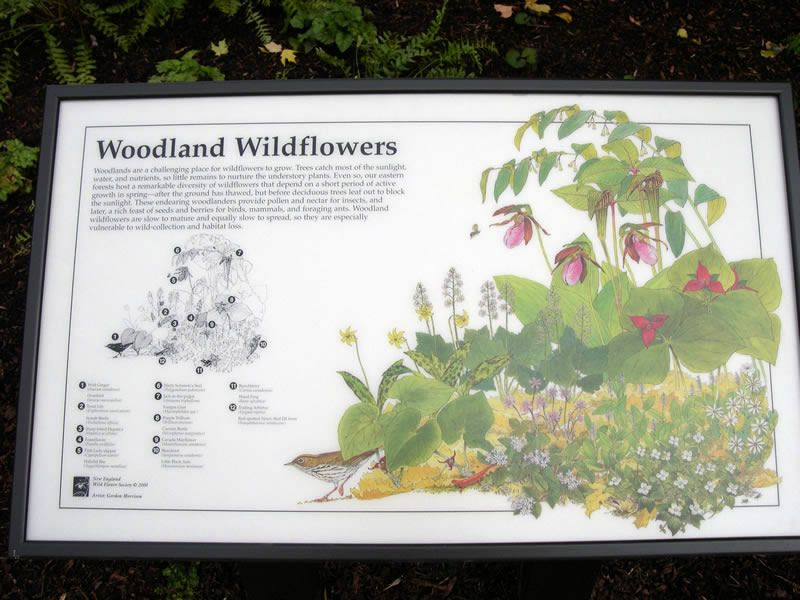 color interpretive signs for plants - Google Search ...