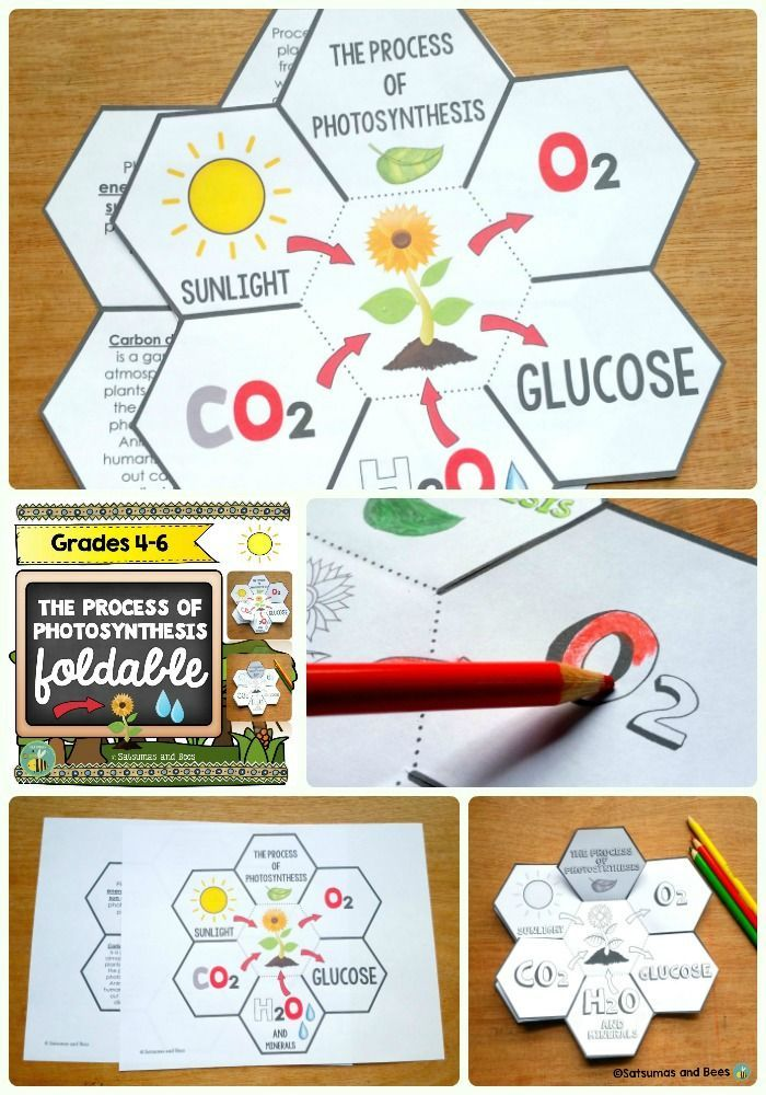 Photosynthesis Interactive Science Notebook foldables Teaching biology