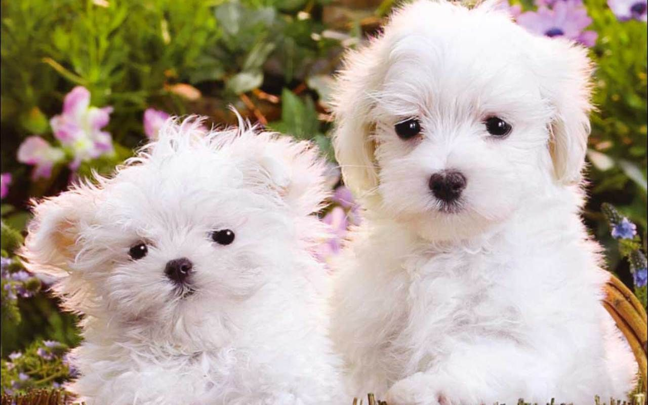 Free Cute Puppies Wallpapers Wallpaper Cave