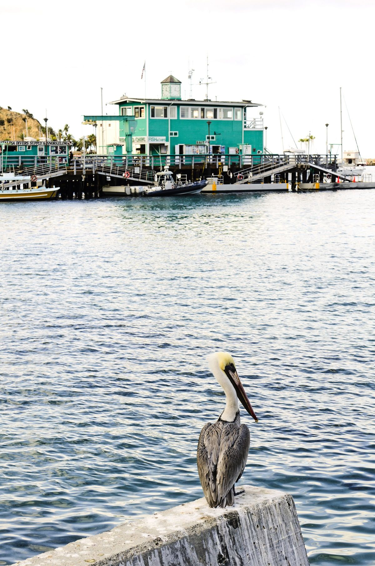 Travel to Southern California's Catalina Island by boat