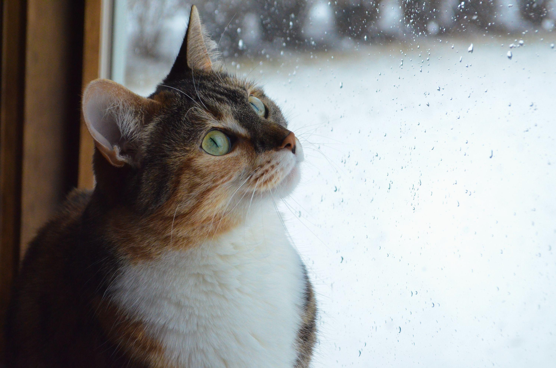 Pet Friendly Blinds & Window Treatments Cat spray, Cat