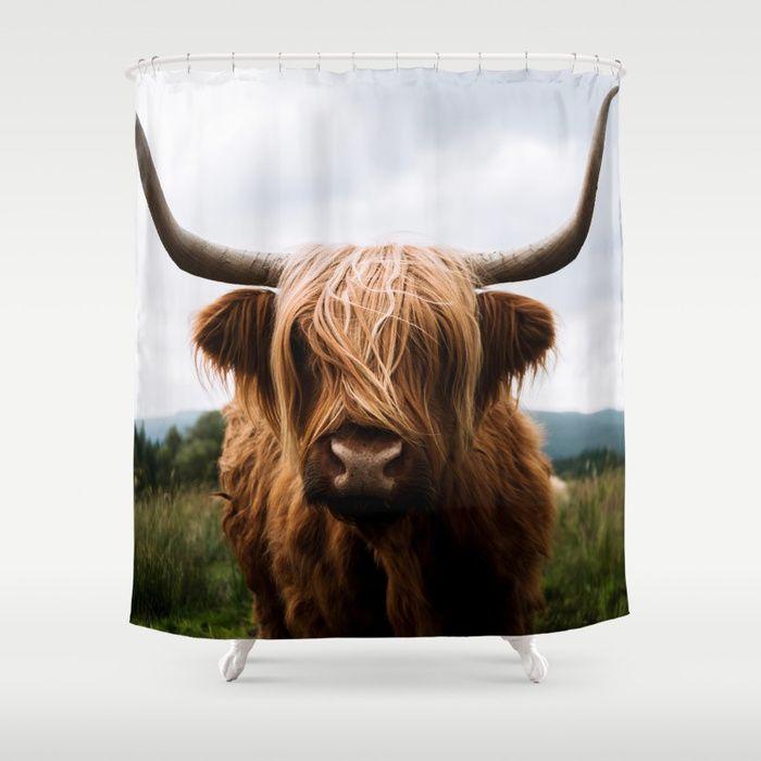 Buy Scottish Highland Cattle In Scotland Portrait Ii Shower