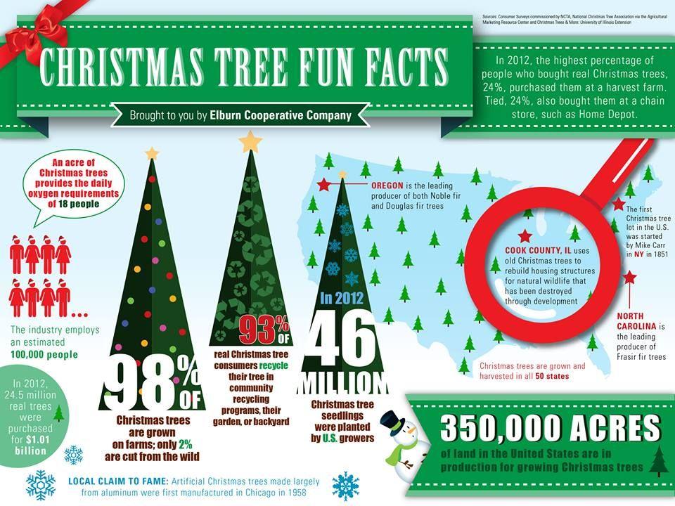 Did You Know That 98 Of Christmas Trees Are Grown On Farms Christmas Trivia Christmas Infographic Christmas History