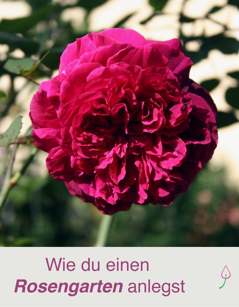 Einen rosengarten anlegen rosen garten garten ideen for Gartenidee beet