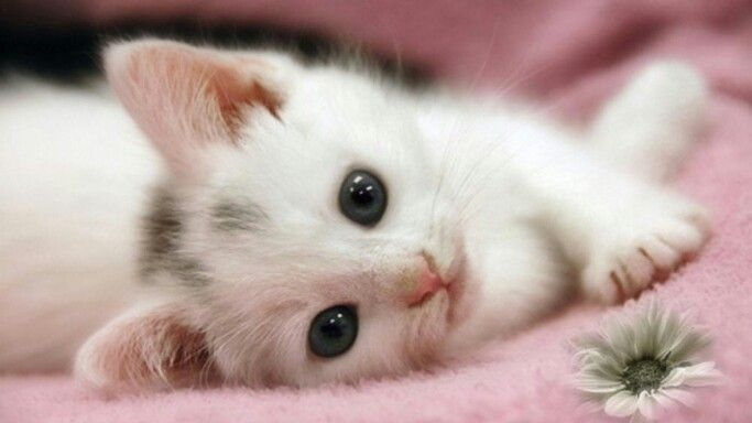 Awesome kitten