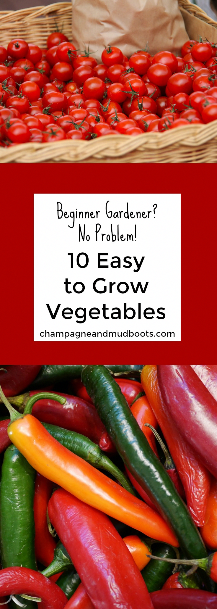 2461 Best Container Gardening Tips Images Container Gardening