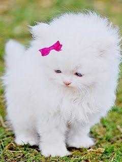 Mobile Pix Kitten Cute Animals Animals Kittens Cutest