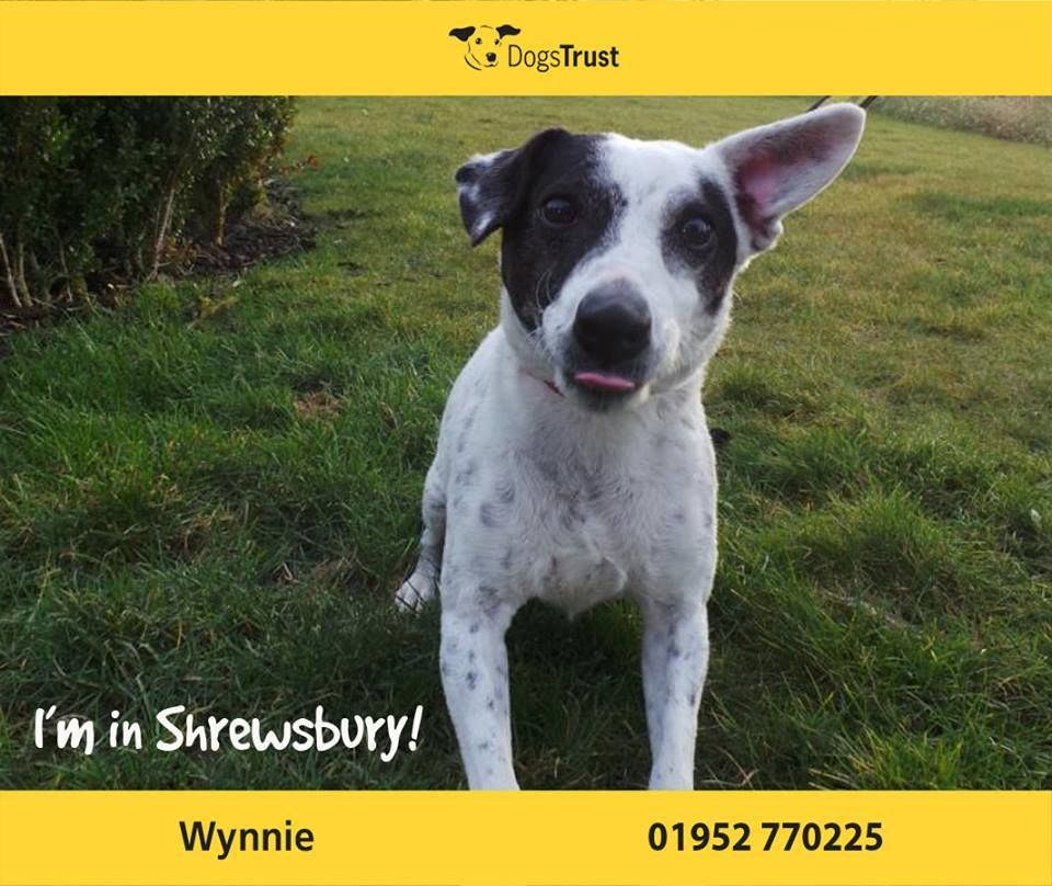 Wynnie at Dogs Trust Shrewsburys ideal home is in a home ...