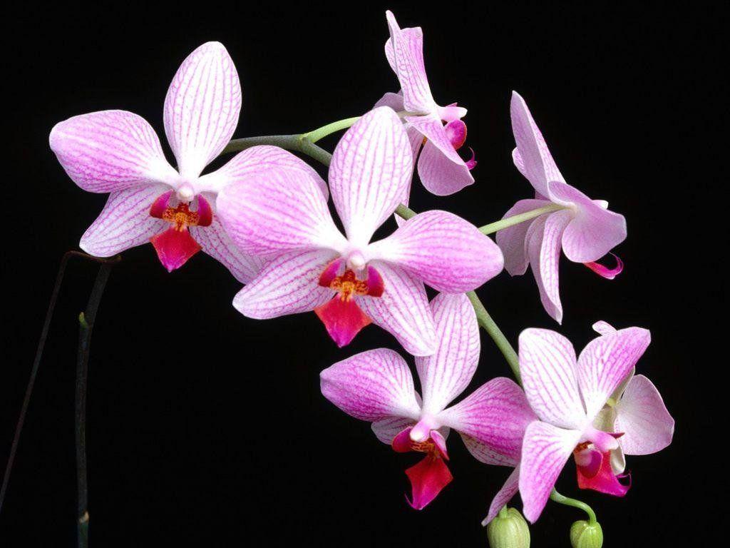 White Orchid Bouquet wallpaper.