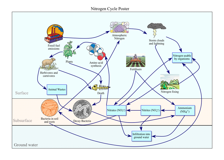 Life science graphic organizer nitrogen cycle poster mrs henzes life science graphic organizer nitrogen cycle poster ccuart Gallery