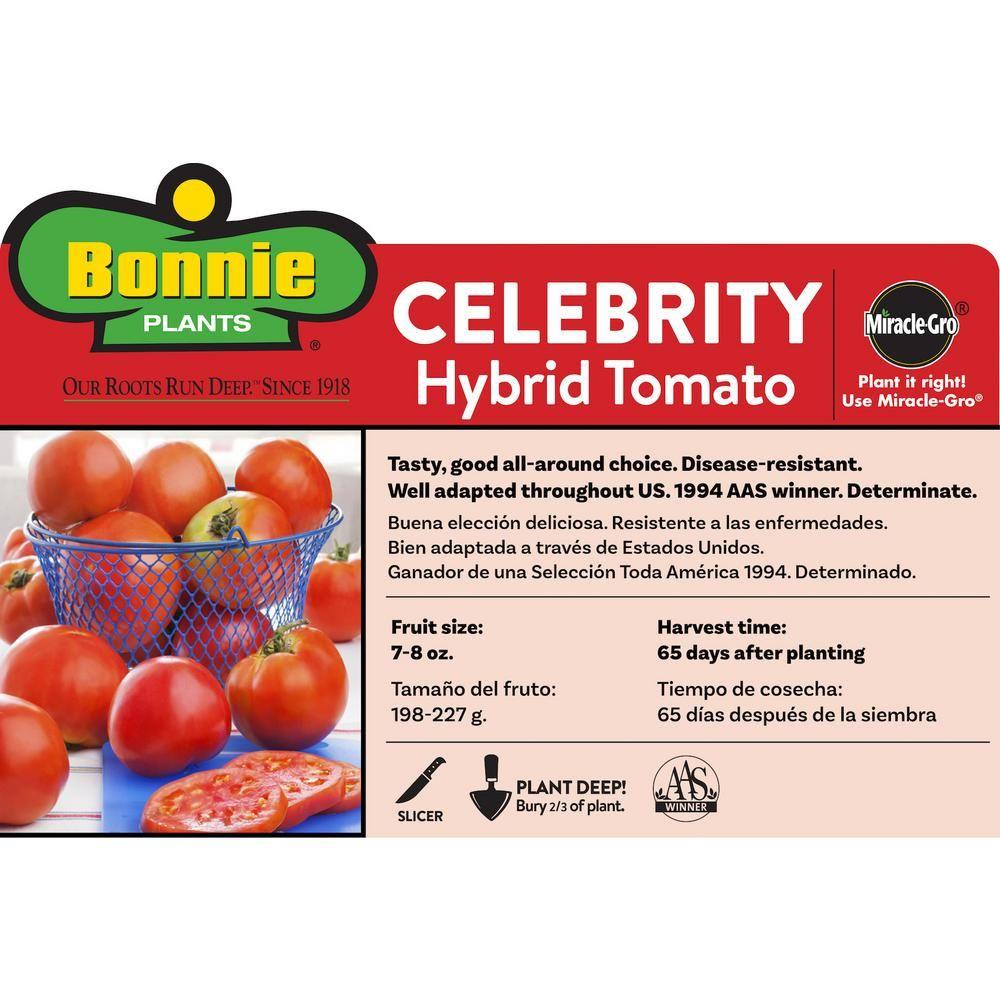 Bonnie Plants 4 5 In 19 3 Oz Tomato Celebrity 0219 The 400 x 300