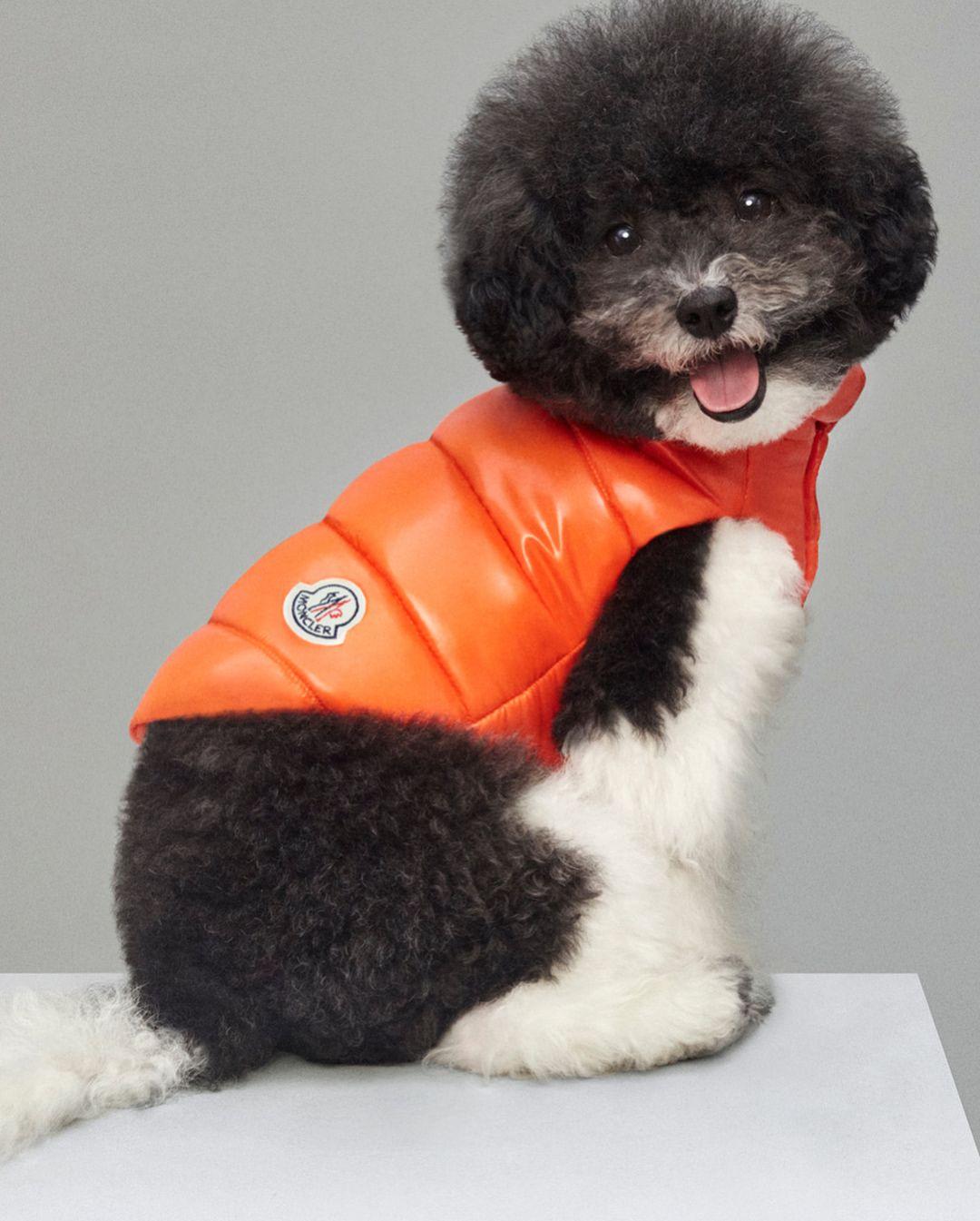 moncler cozy dog apparel 2017 kopu lar dogs pets dog coats rh pinterest com