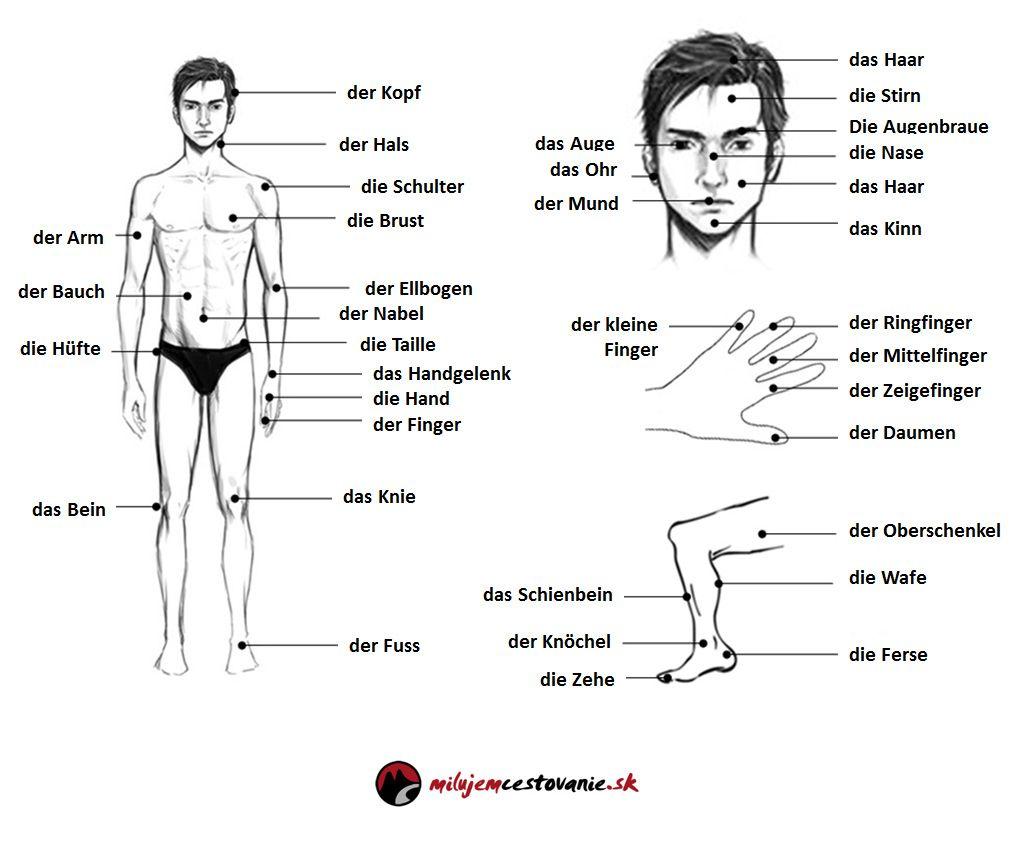 Časti tela po nemecky - der menschliche Körper | Nemčina pre ...