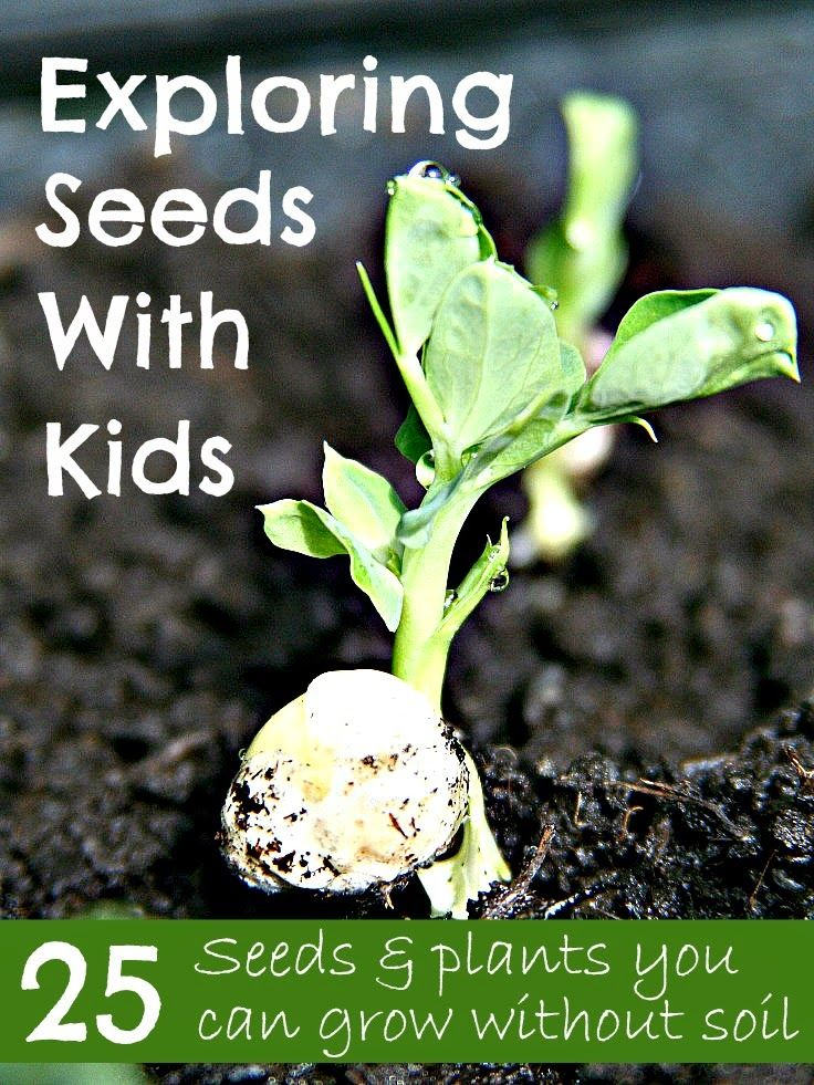 Exploring Seeds With Kids     25 Seeds  U0026 Plants You Can