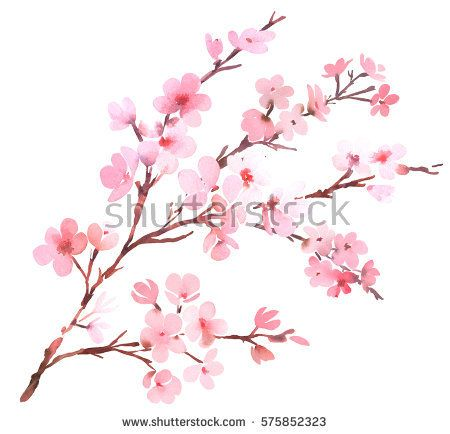 Watercolor With Spring Tree Branch In Blossom Pink Blossom Watercolor Tree Branch Wit Cherry Blossom Art Cherry Blossom Watercolor Cherry Blossom Tree Tattoo