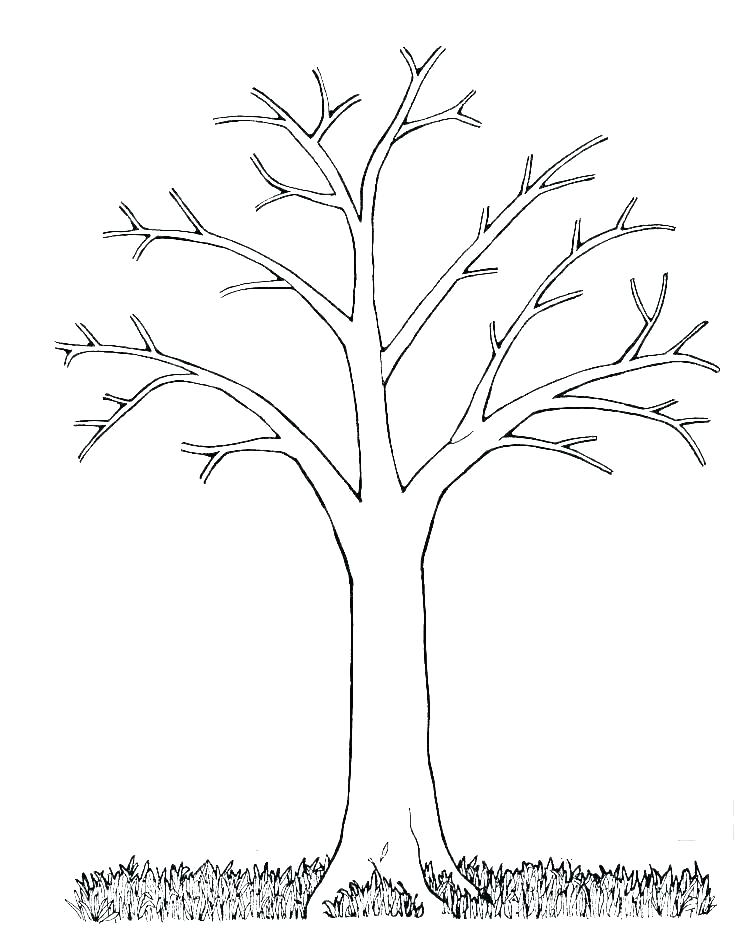 Leafless Tree Outline Tree Trunk Outline Tree Trunk And Branches Template Tree Branch Trunk Tree Branches Tr Tree Coloring Page Leaf Coloring Page Tree Outline