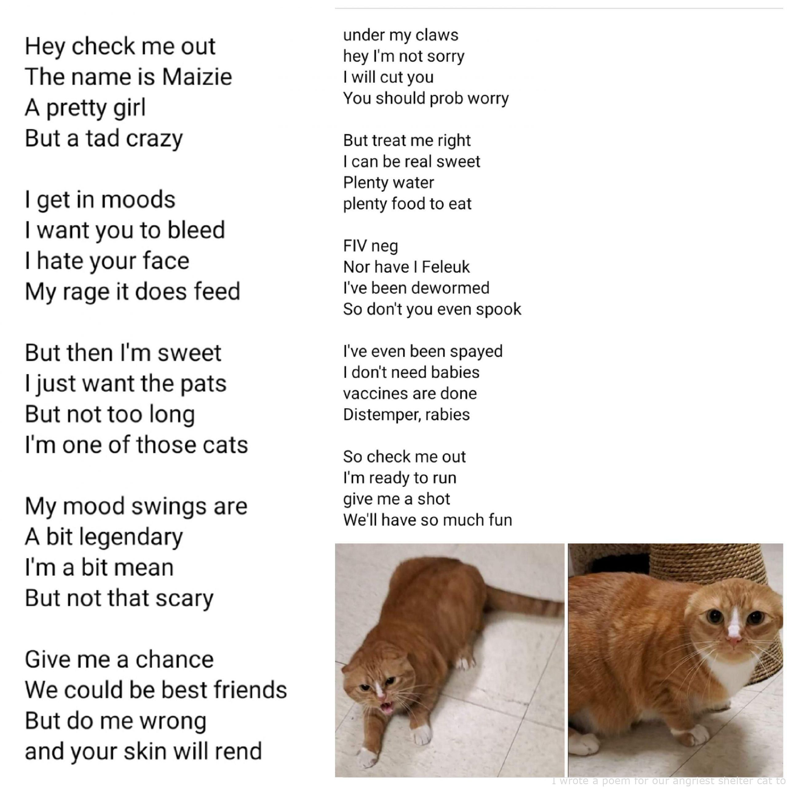 Animals I Wrote A Poem For Our Angriest Shelter Cat To Try Out