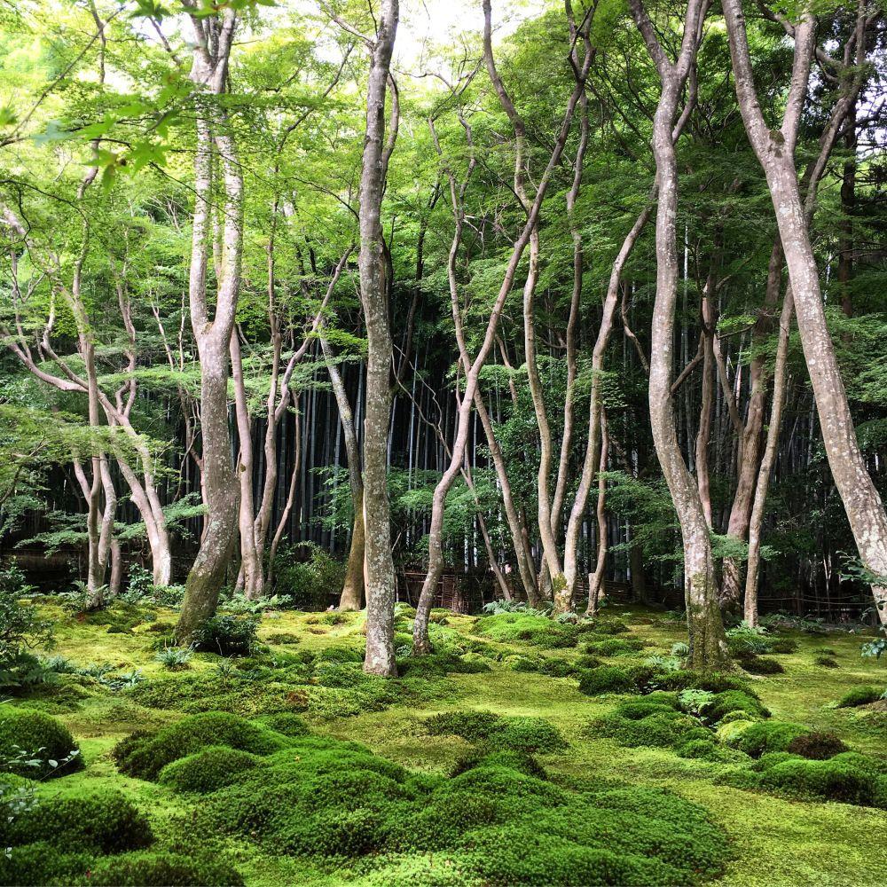 Gioji, Kyoto