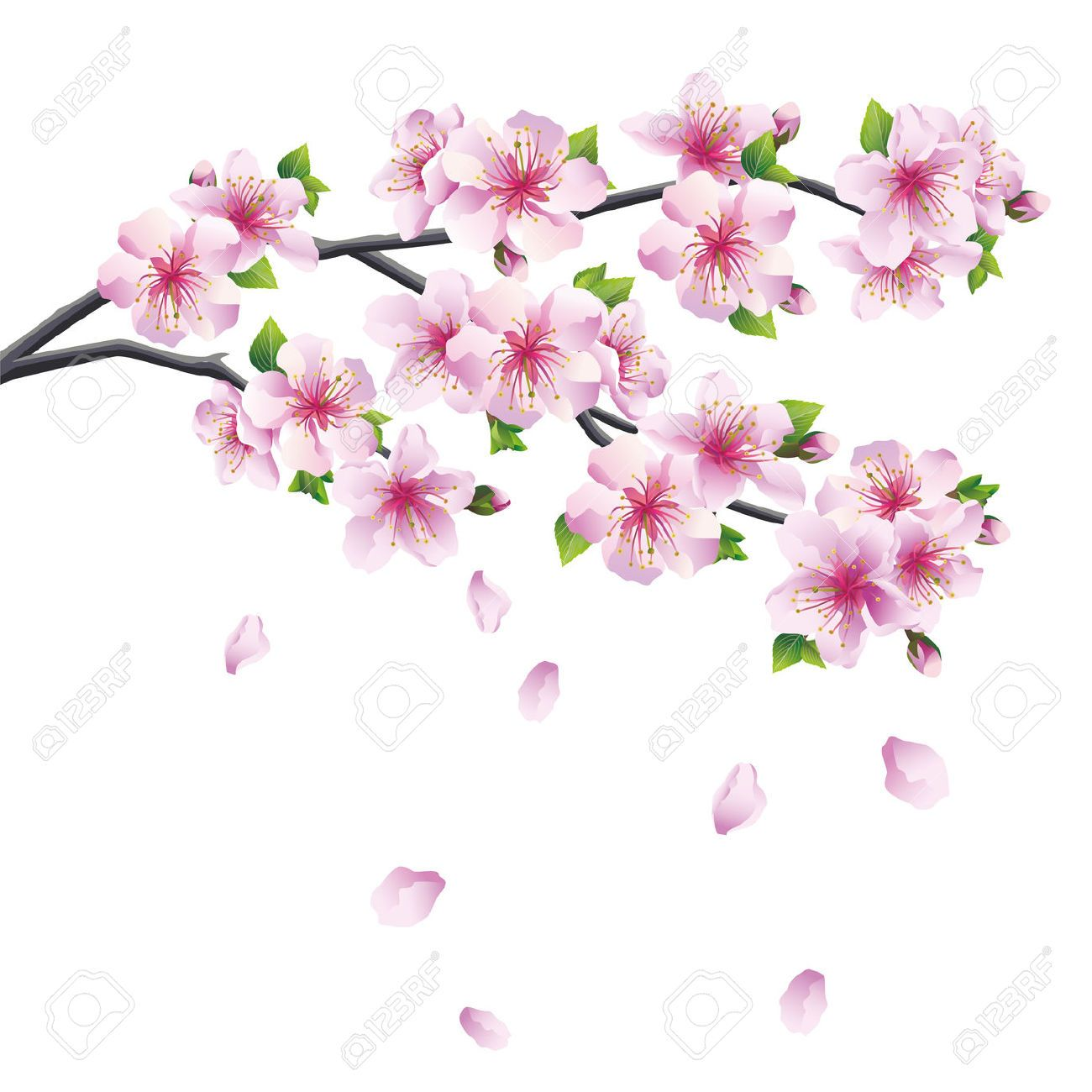 29121011 Blossoming Branch Of Sakura Japanese Cherry Tree With Falling Petal Beautiful Cherry Blossom P Dessin Fleur Fleur De Cerisier Dessin Fleur De Cerisier