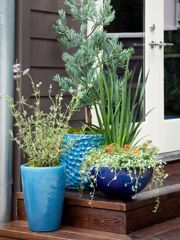 Year-Round Container Garden Plants: Cleveland Sage, 'Icee Blue Yellowwood', African Iris, Calibrachoa 'Tequila Sunrise', Dichondra 'Silver Falls'