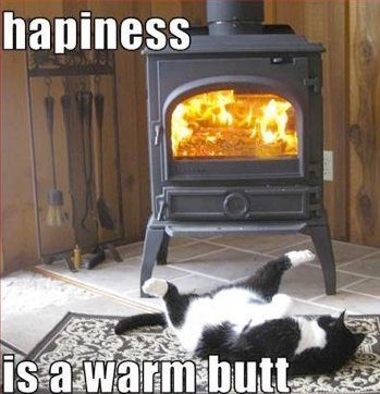 Happiness is a warm butt!!