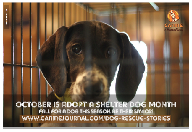 October Is Adopt A Shelter Dog Month Get Yourself Some