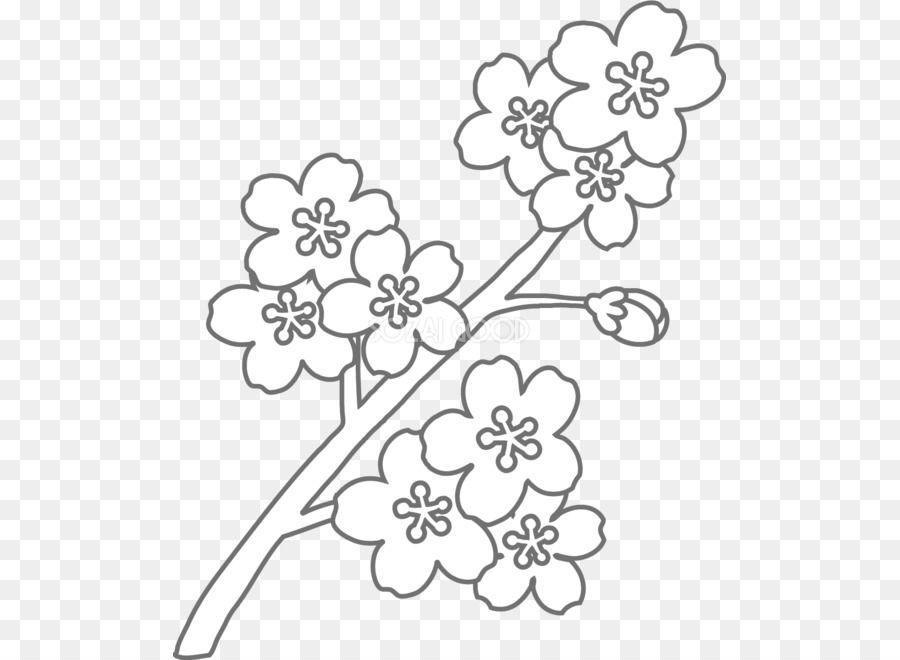 Gambar Bunga Sakura Mewarnai Ahmedatheism Gambar Mewarnai Bunga Sakura Gambar Bunga Tulip Wiring Diagram Database Collecti Gambar Bunga Bunga Bunga Sakura