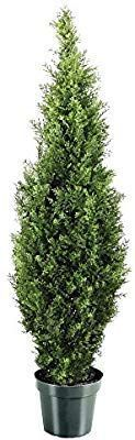 Amazon.com: National Tree 36 Inch Arborvitae Tree in Dark Green Round Plastic Pot (LMC4-700-36-1): Home & Kitchen #darkgreenkitchen Amazon.com: National Tree 36 Inch Arborvitae Tree in Dark Green Round Plastic Pot (LMC4-700-36-1): Home & Kitchen #darkgreenkitchen Amazon.com: National Tree 36 Inch Arborvitae Tree in Dark Green Round Plastic Pot (LMC4-700-36-1): Home & Kitchen #darkgreenkitchen Amazon.com: National Tree 36 Inch Arborvitae Tree in Dark Green Round Plastic Pot (LMC4-700-36-1): Home #darkgreenkitchen