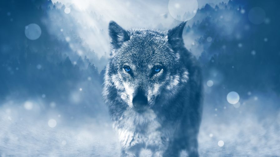 Winter Wolf 4k Desktop Wallpaper In 2019 Wild Animal