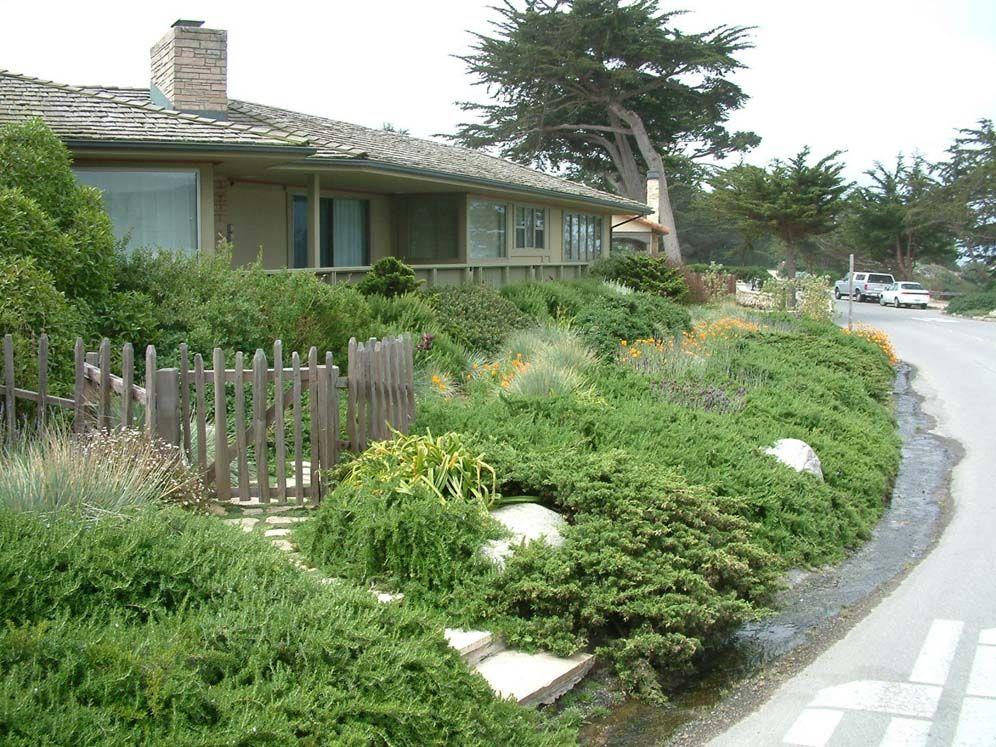 No-Mow Front Yard | Drought tolerant garden, Mowing, Lawn on No Mow Backyard Ideas id=99784