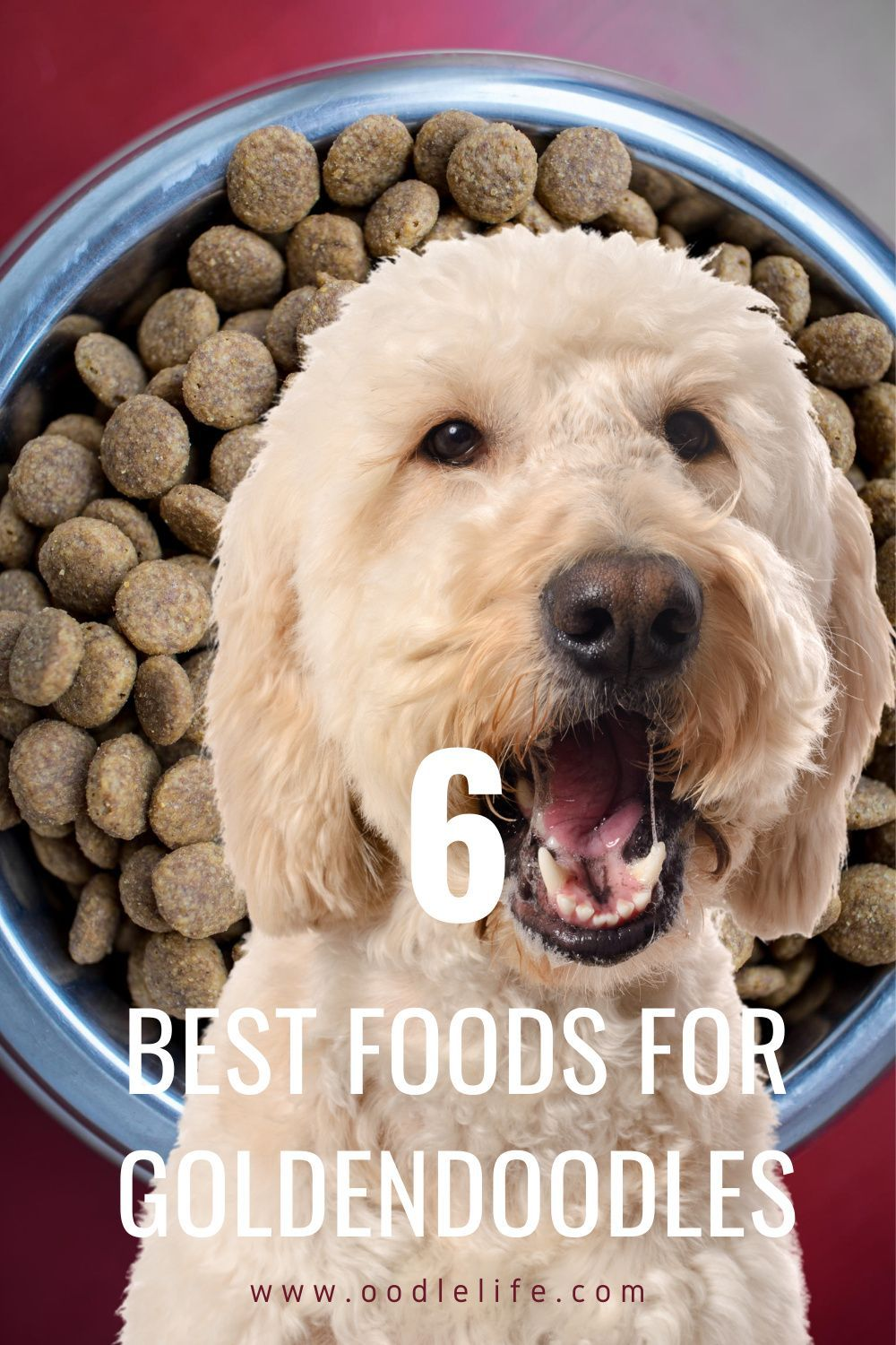 6 best foods for goldendoodle dogs reviewed oodle dogs