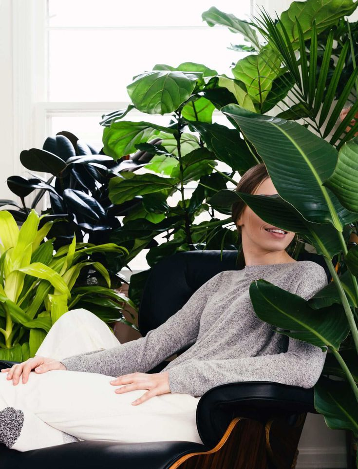 The 7 Best Places To Buy Plants Online   Benefits of ...
