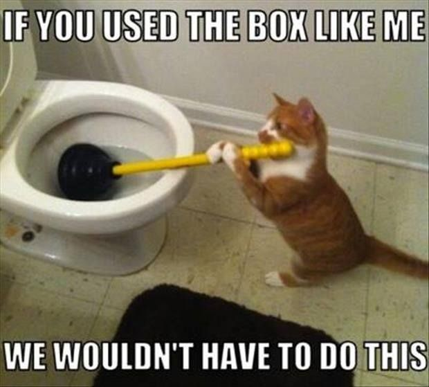If you used a box like me-we wouldn't have to do this-cat wisdom =^..^=