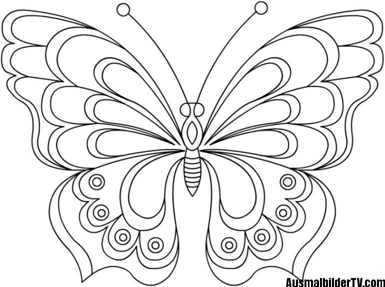 Schmetterling Malvorlage Ausmalbilder Schmetterling Malvorlage Schmetterling Ausmalbilder
