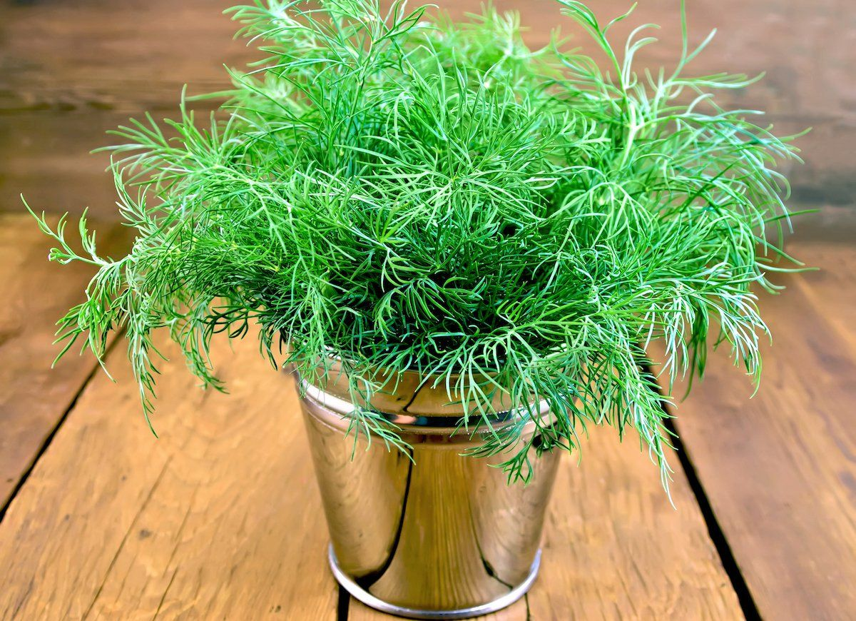 12 Easy Herbs To Grow On Your Windowsill Easy Herbs To Grow