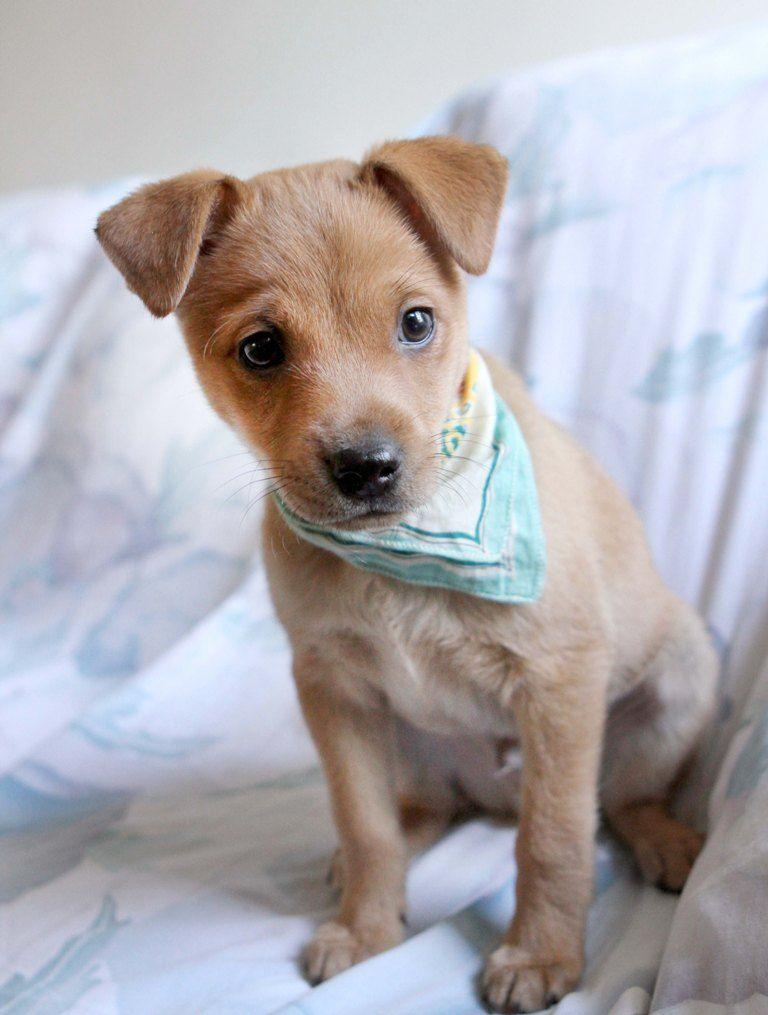 Adopt Gleason On Cute Little Animals Cute Animals Funny Animals