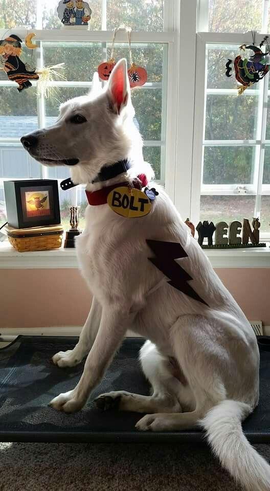 Diy Disney Bolt Halloween Costume For Your Dog Pet Costumes