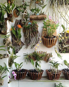 Trade orchid supplies wood baskets orchids growing - Interior plant maintenance contract ...