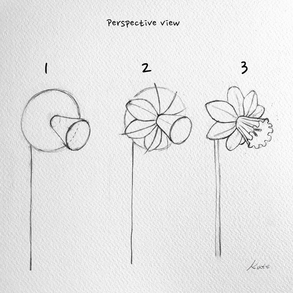How To Draw A Daffodil Step By Step Flowers Pop Culture Free Online Drawing Tutorial Added By Dawn September 24 20 Flower Drawing Drawings Plant Drawing