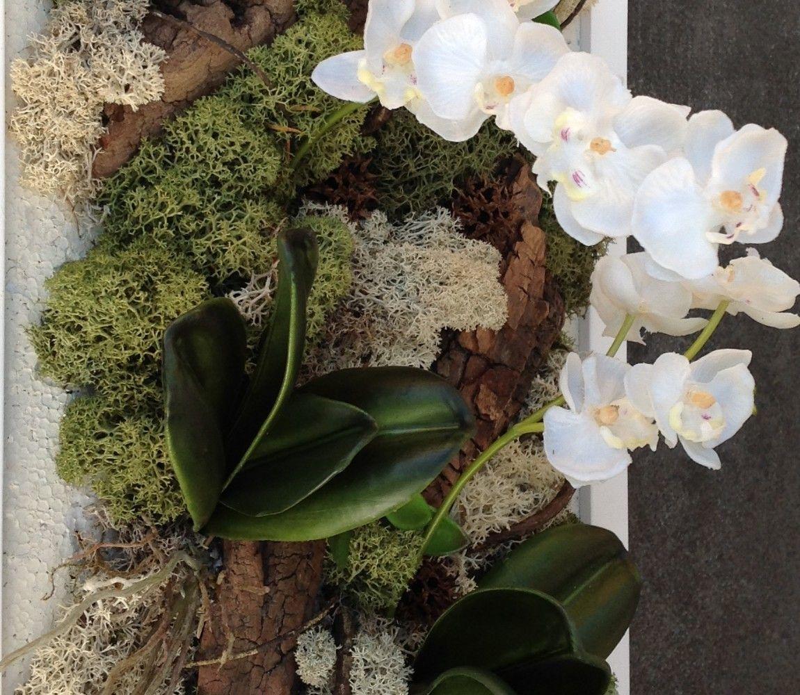 tableau vegetal orchidees mini phalaenopsis h52 l26 blanc tableau cadre mur v g tal paysage. Black Bedroom Furniture Sets. Home Design Ideas