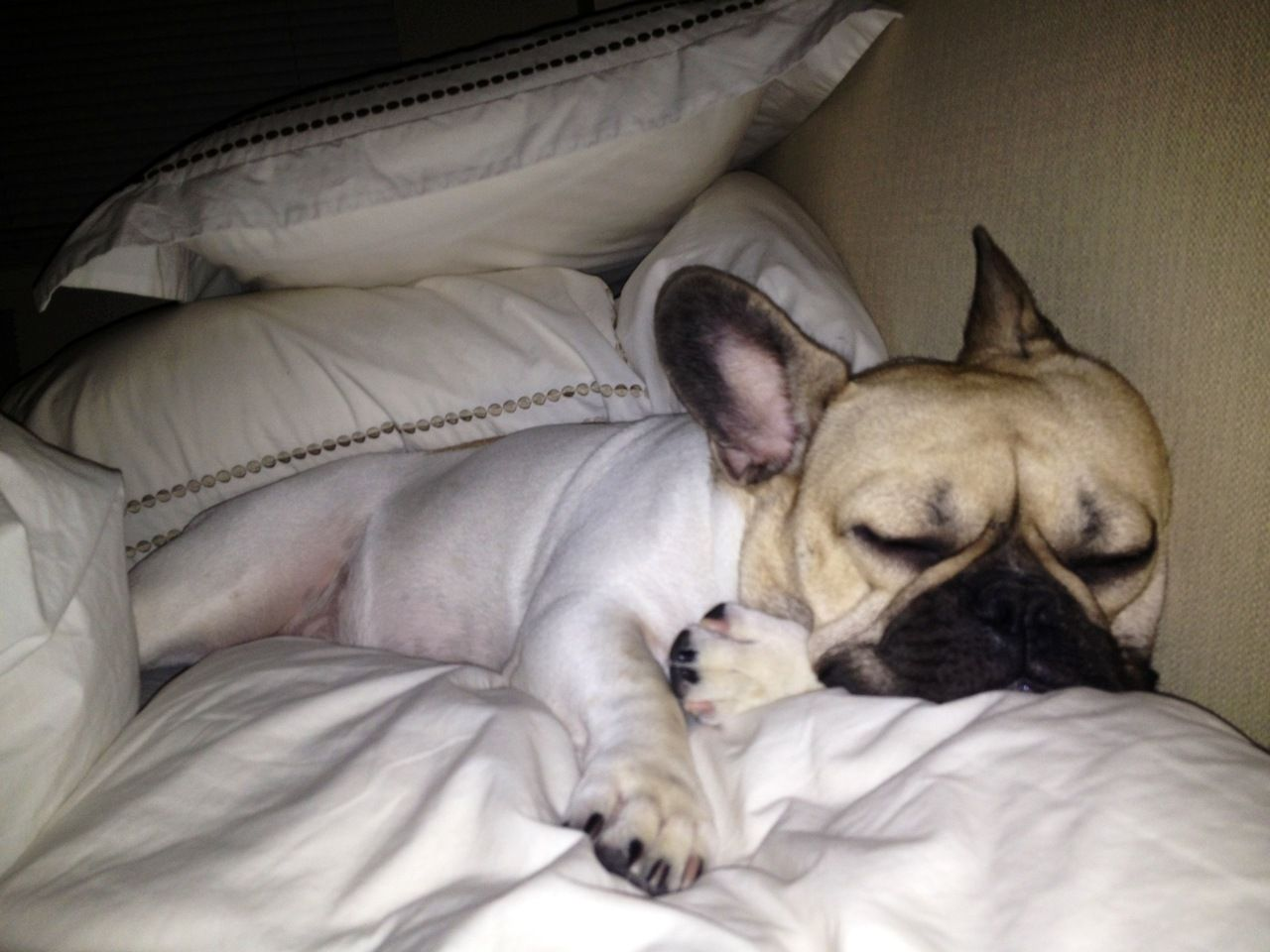 Raoul Post Holiday Slumber By Diane