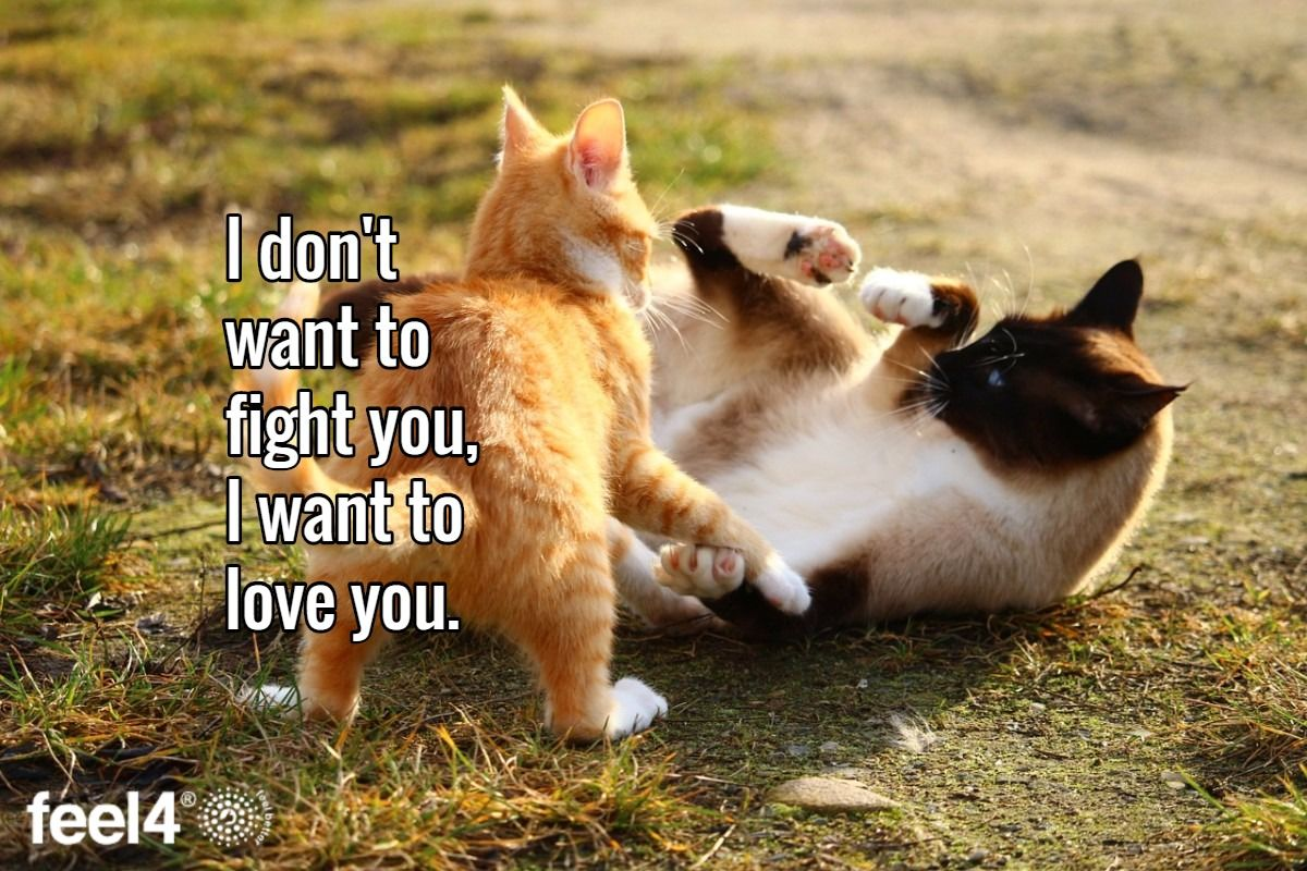 I don't want to fight you, I want to love you.